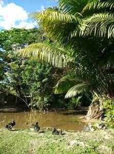 El estanque de los patos